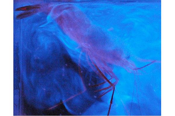 0906-light-vomiting-shrimp_full_600.jpg