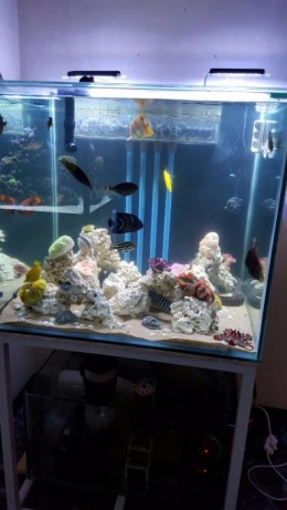 1002143106_7_644x461_3-up-and-running-marine-fish-tanks-for-sale-with-fish-.jpg