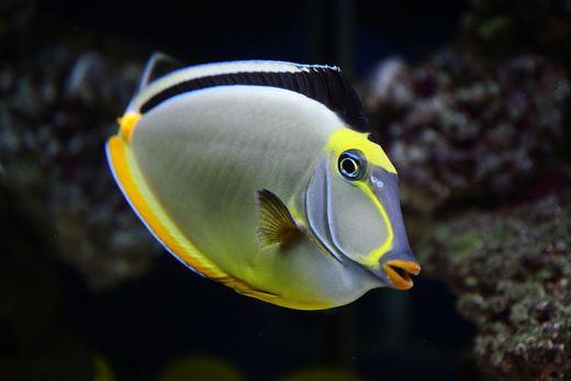 Most beautiful favorite fish marine aquariums south africa for Saltwater fish representative species