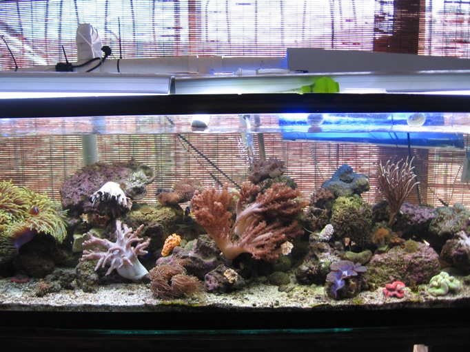 Kenya Tree Vs Mushroom Marine Aquariums South Africa