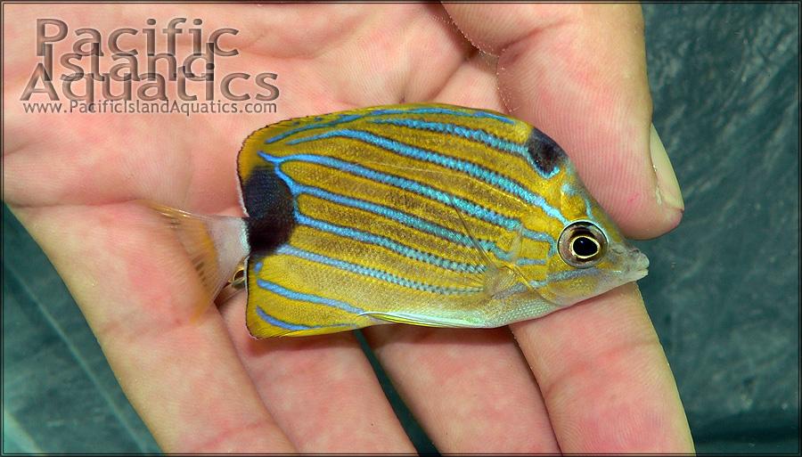 14SEP11_Blue-Stripe_275i_001.jpg
