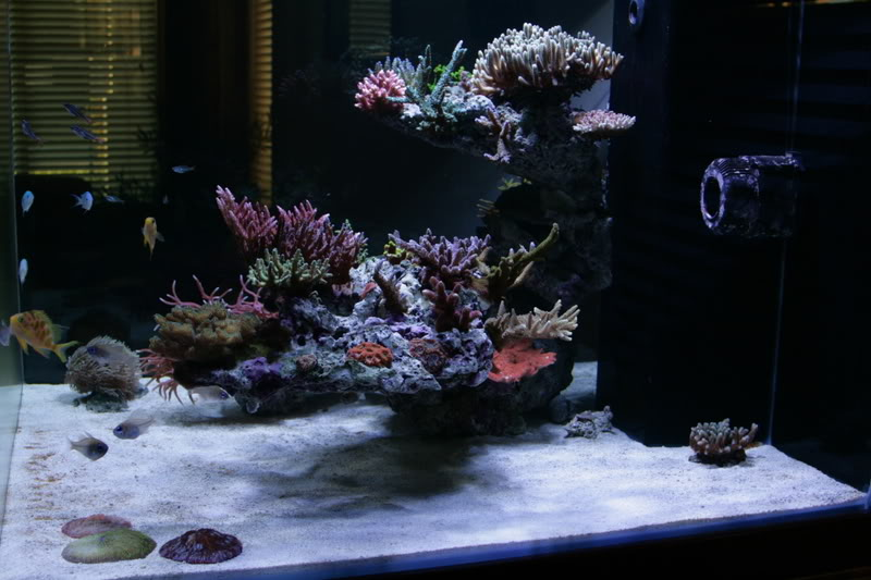 Aquascaping For 900mm Cube Marine Aquariums South Africa