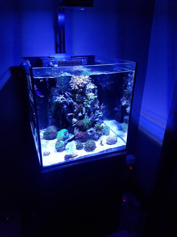 Fs Red Sea Reefer Nano Cpt Hardware For Sale Swap