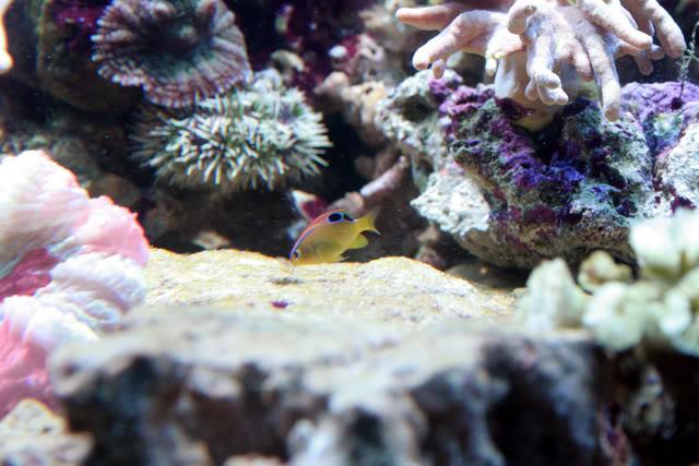 21marchsmallneonfish.jpg
