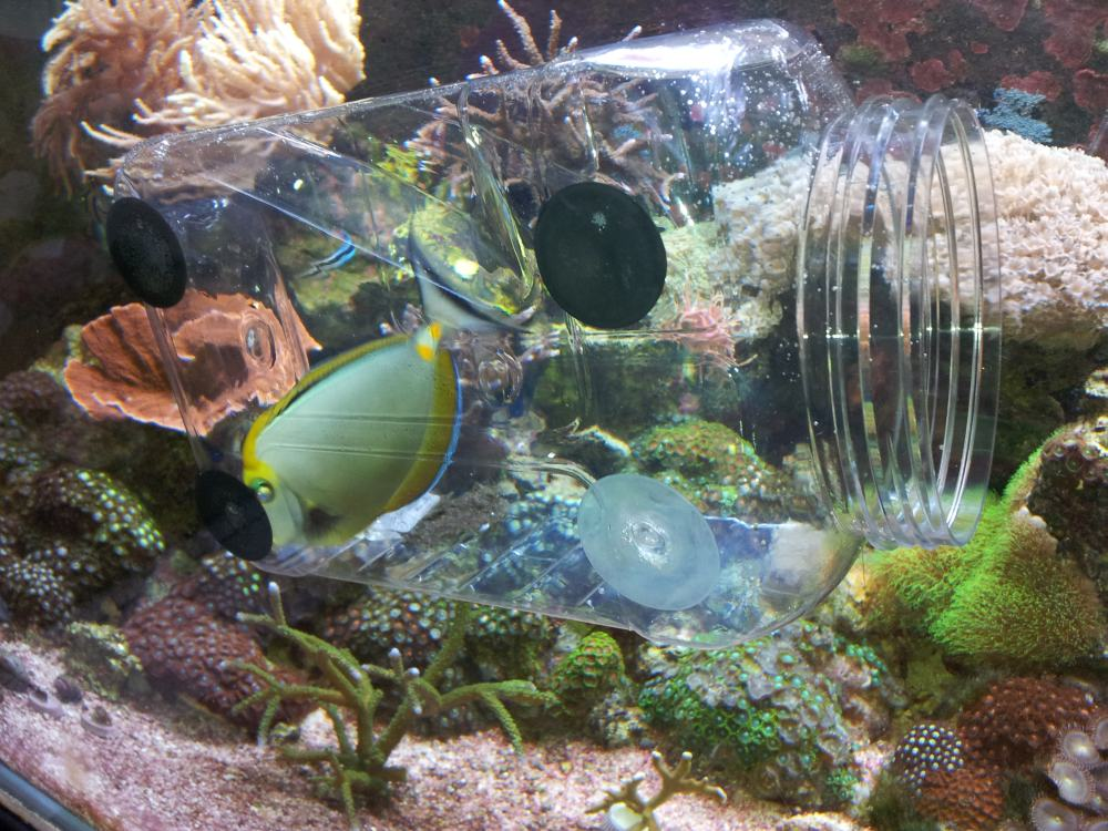 My fish trap marine aquariums south africa for Aquarium fish trap