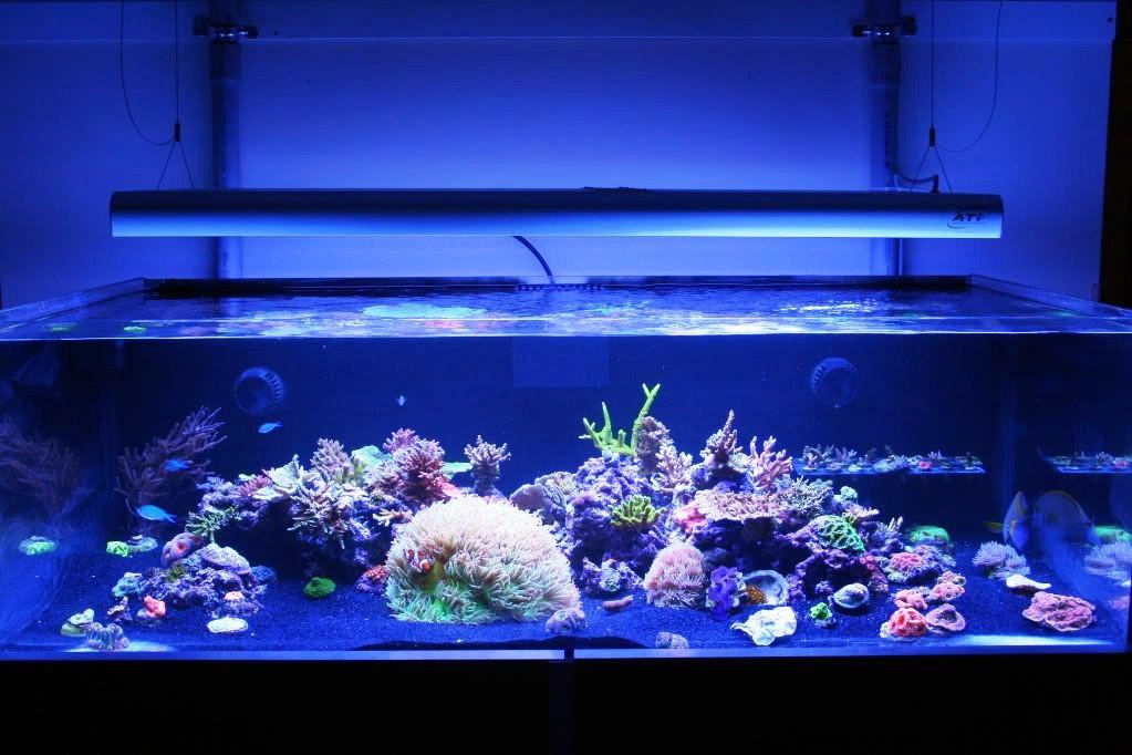 Anyone running a tank with black sand marine aquariums for Black sand fish tank