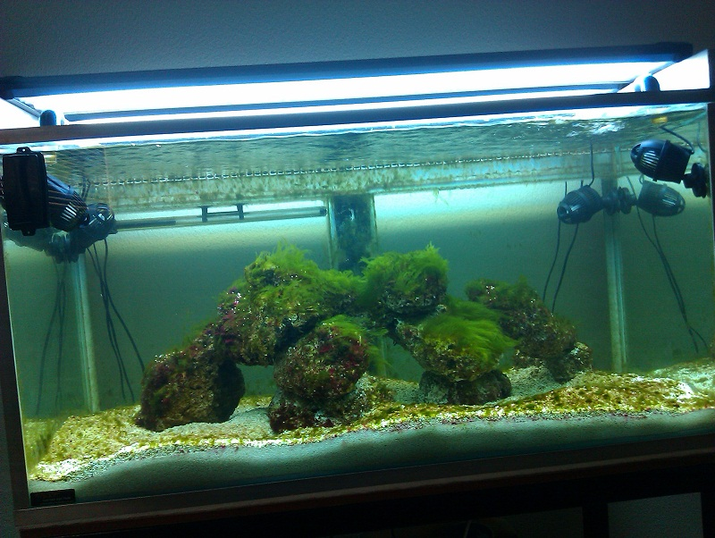 new tank cycle period algae bloom marine aquariums
