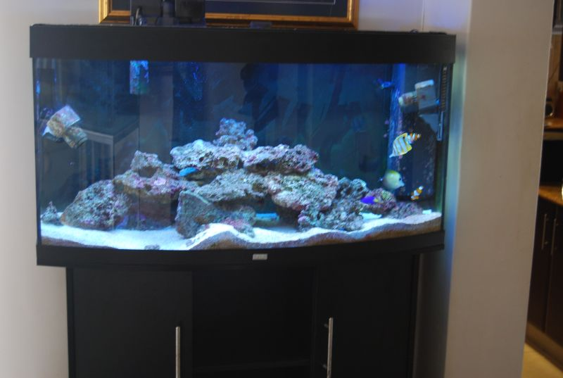 juwel vision 260 for sale durban marine aquariums. Black Bedroom Furniture Sets. Home Design Ideas