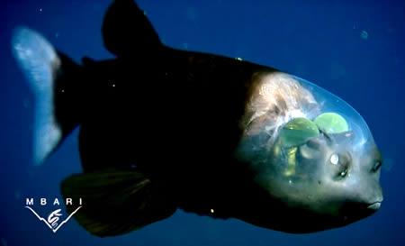 a357_fishhead.jpg