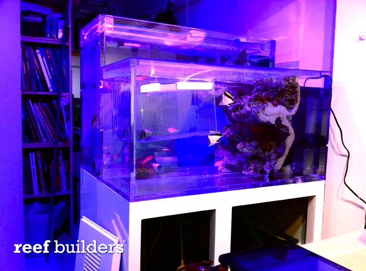 acrylic-deepwater-tanks.png