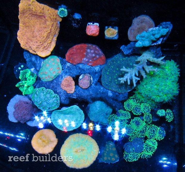 aivega-led-aquarium-2.jpg