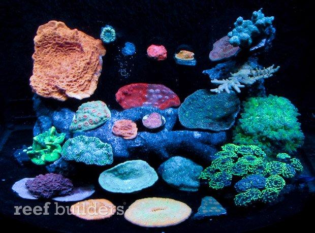 aivega-led-aquarium-3.jpg