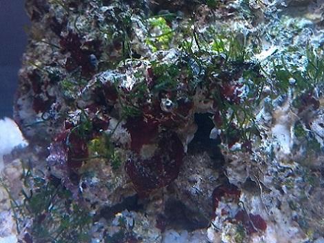 algae01.jpg
