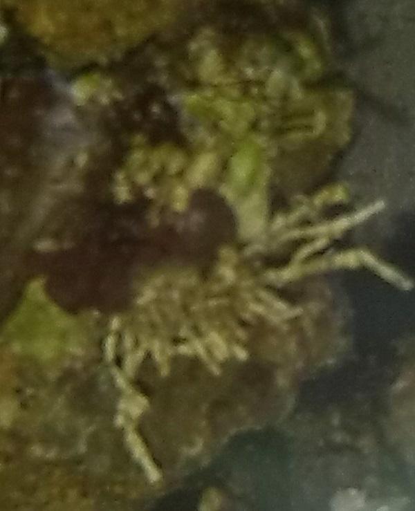 algae02.jpg