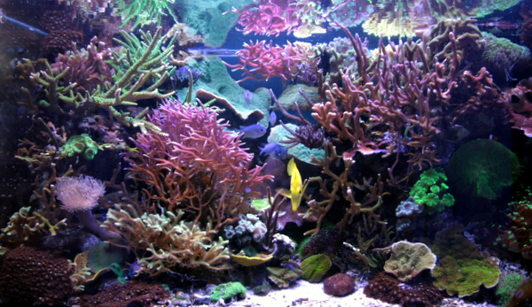 rss alpheus made to order led ls some serious research them marine aquariums