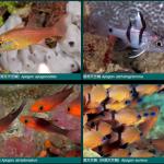 apogon-cardinalfish-150x150.png