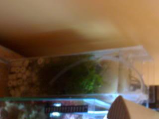 aqpics090108052.jpg
