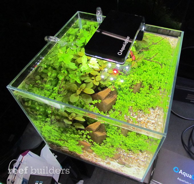 rss top 5 led lights for nano reef aquariums in 2012 marine aquariums south africa. Black Bedroom Furniture Sets. Home Design Ideas