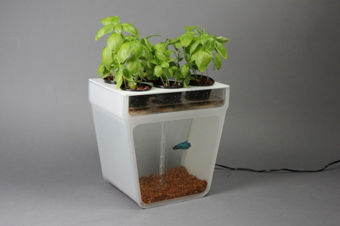 Aquaponics-news-item-e1354296211945.jpg