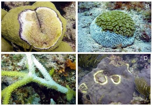 aquarium-coral-disease.jpg