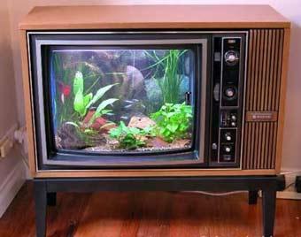 aquarium-TV.jpg