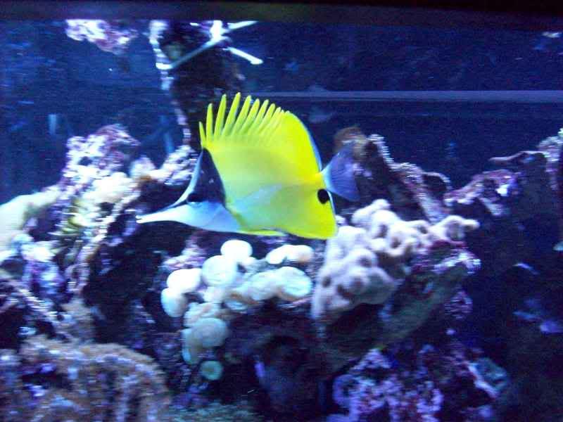 Aquarium014.jpg