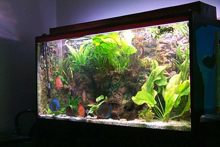 Aquarium_backgrounds_013.jpg