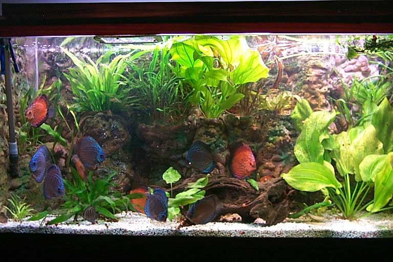 Aquarium_backgrounds_014.jpg