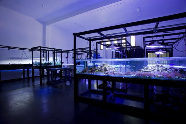 aquascapers-lab.jpg