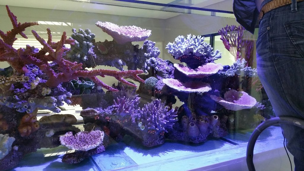 Artificial Reef 1.jpg