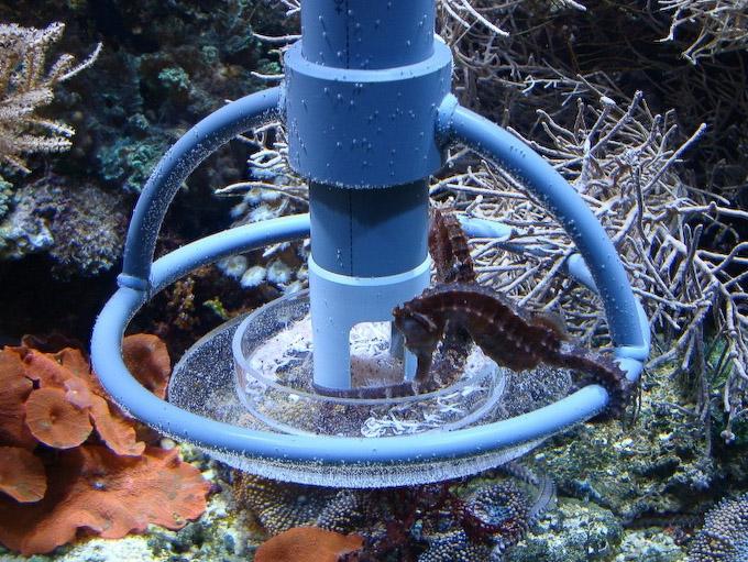 atb-seahorse-feeder-2.jpg
