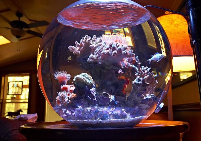 Azoox-fish-bowl-2.jpg