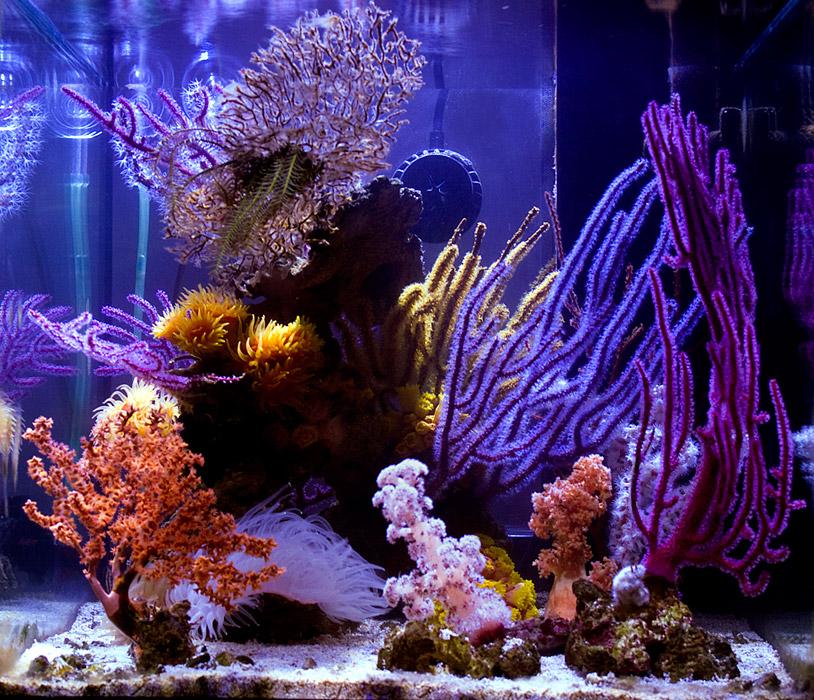 azoox-nano-reef.jpg