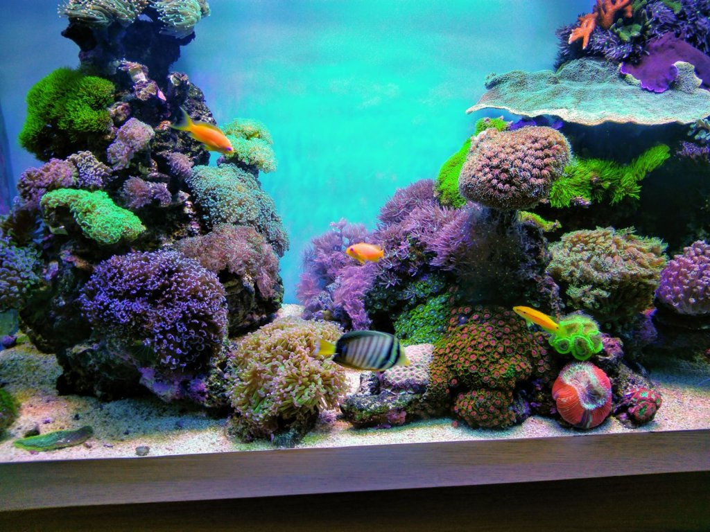 best-reef-aquarium-led-1413x1060.jpg