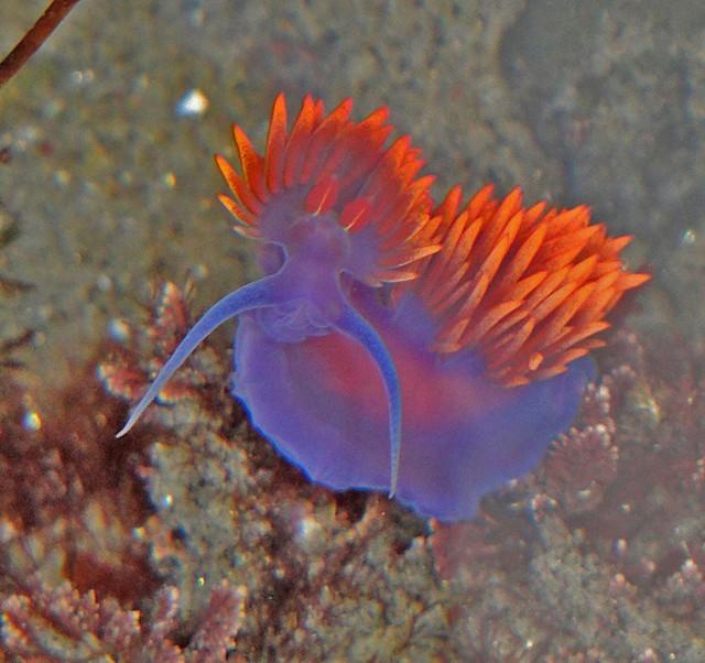 birch_Aquarium_tidepooling_nudibranch-e1357930634659.jpg
