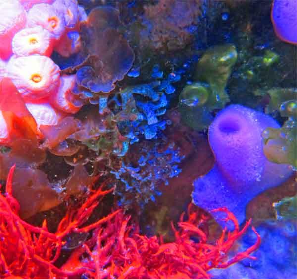 blue-algae-2-25-12-12-.jpg