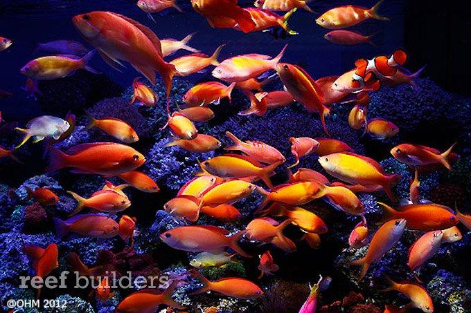 bluespace-aquarium-1.jpg