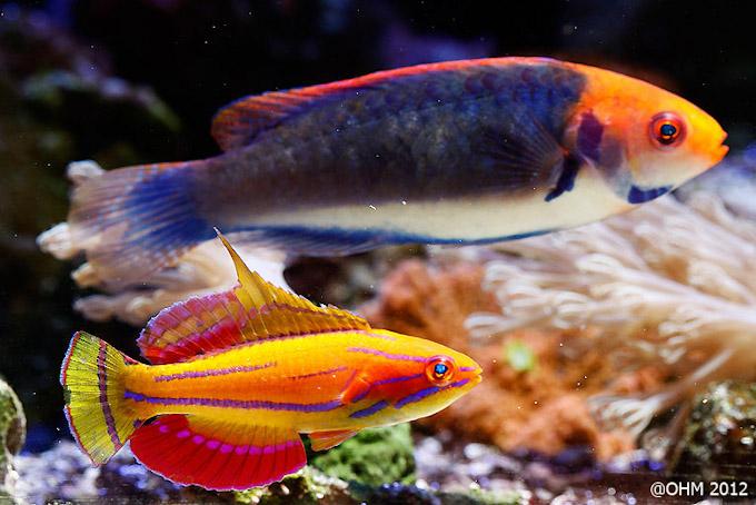 bluespace-aquarium-2.jpg