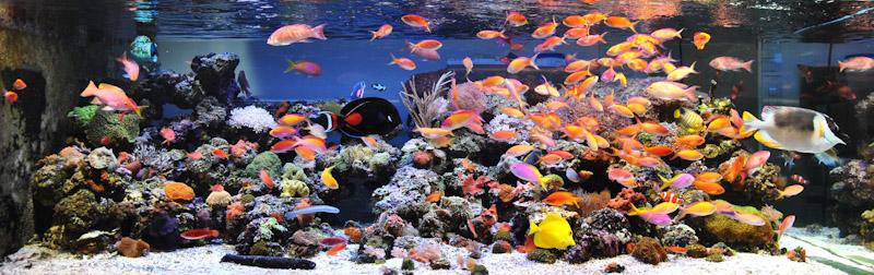 bluespace-aquarium-bangkok-1.jpg