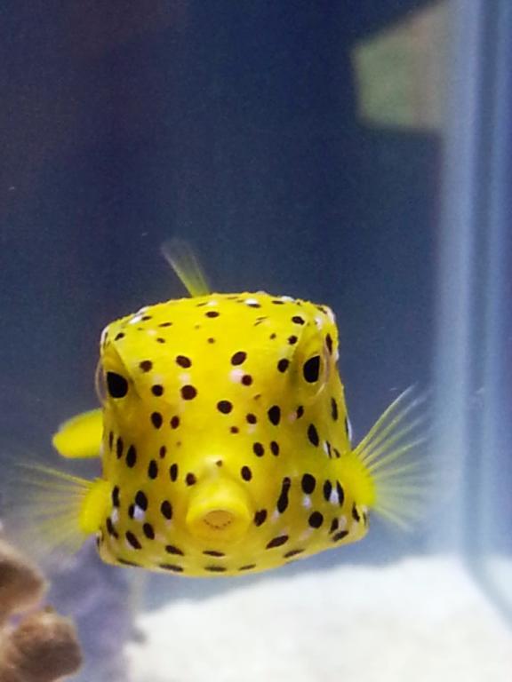 boxfish.jpg