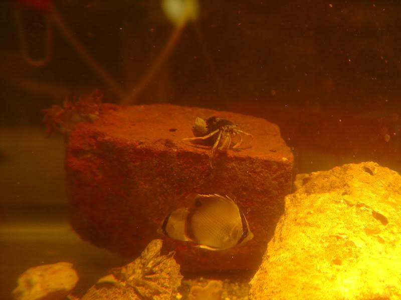 boxfish004.jpg