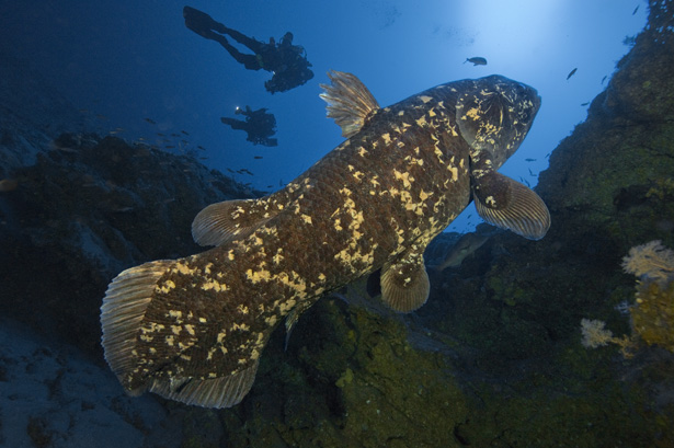 coelacanth-fossil-fish.jpg