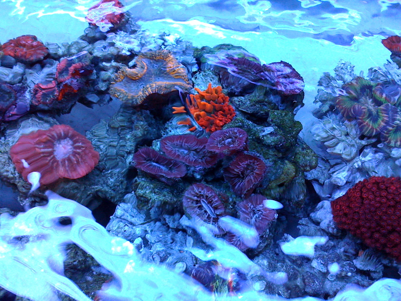 Colorful-LPS-corals.jpg