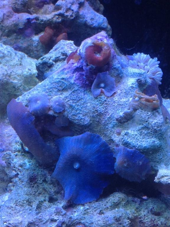 coral 2.jpg