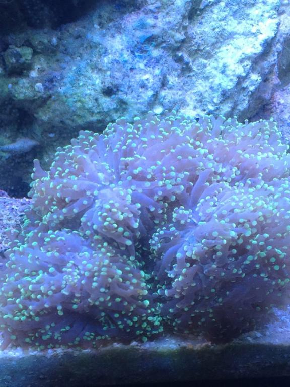 coral 3.jpg
