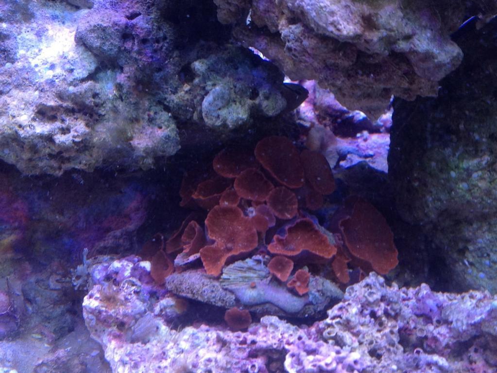 coral 4.jpg