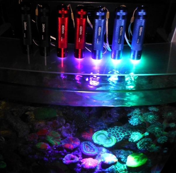 coral-fluorescent-protein-flashlight-2.jpg