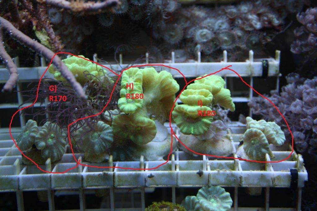 coral frags 336.jpg