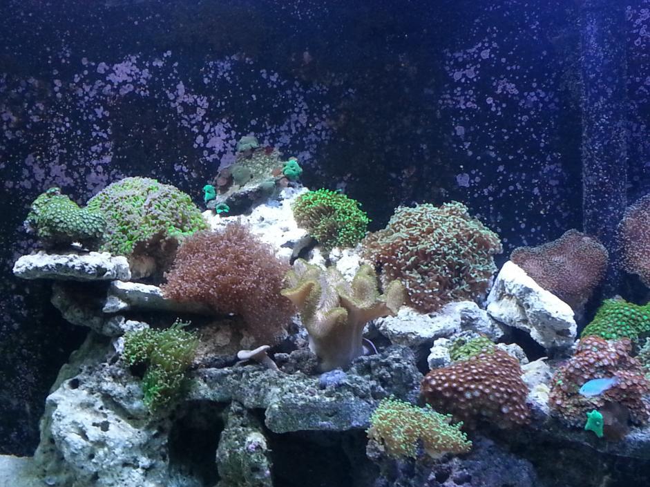 Coral left.jpg