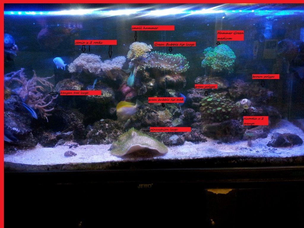 coral lists.jpg